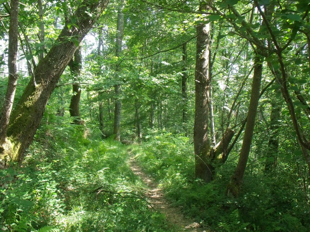 Chemin d'accès à votre cabane écologique